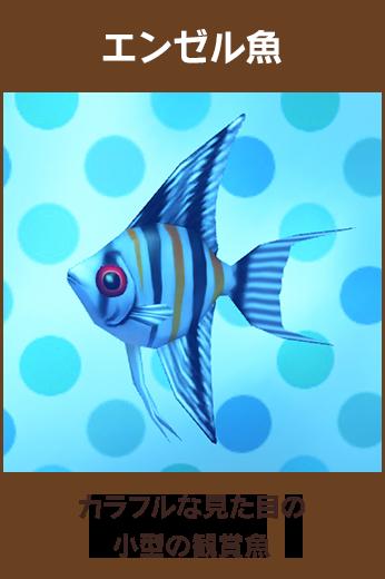エンゼル魚