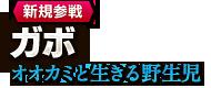 【新規参戦】ガボ